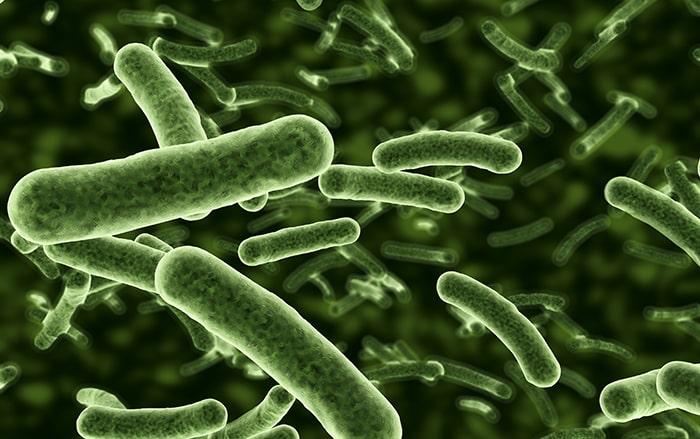 สาเหตุของการเกิดสิวจากแบคทีเรียหรือBacteria